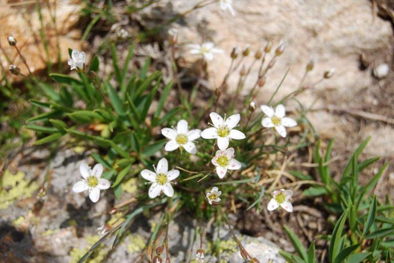fleurs blanches20 Juillet (22)